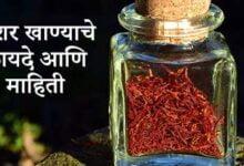 Photo of केशर खाण्याचे फायदे आणि माहिती – Keshar Khanyache fayde