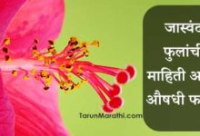 Photo of जास्वंद फुलांची माहिती आणि औषधी फायदे – Jaswand Flower Mahiti